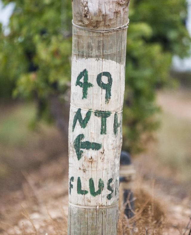 Byrne Vineyards